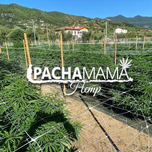 Pachamama-hemp-facebook-open-graph