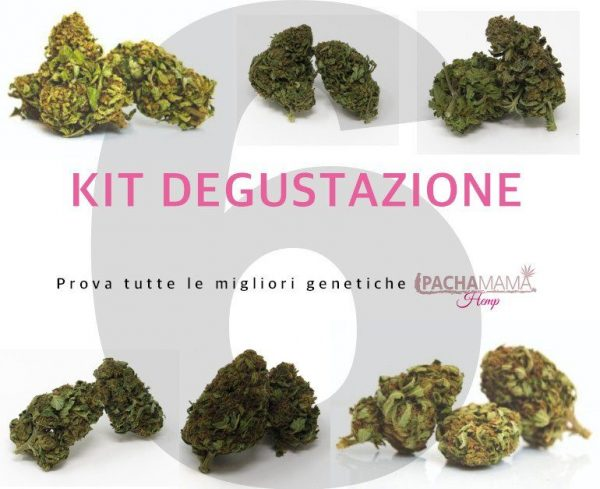 Pachamama-kit-degustazione-fiori-canapa-biologica-6
